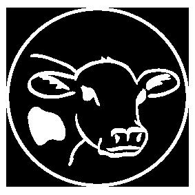 Maito: Lehmä